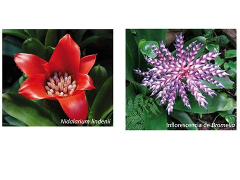 Flower, Flowering plant, Plant, Petal, Botany, Terrestrial plant, Wildflower, Passion flower family, Passion flower, Cestrum,