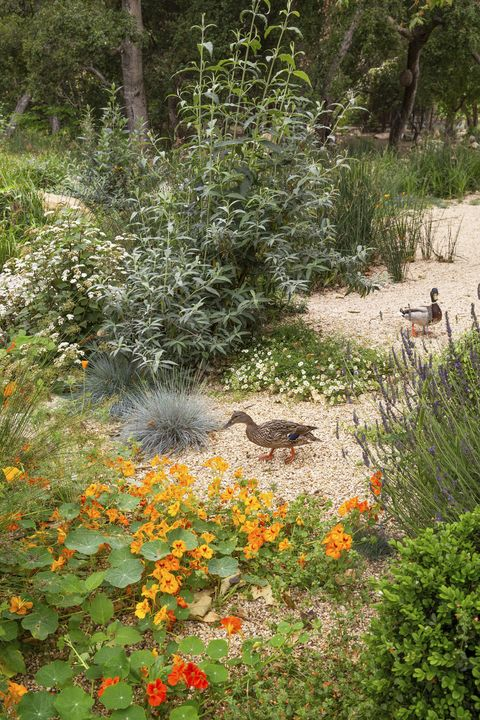 montecito-ducks-outdoor-awards-veranda