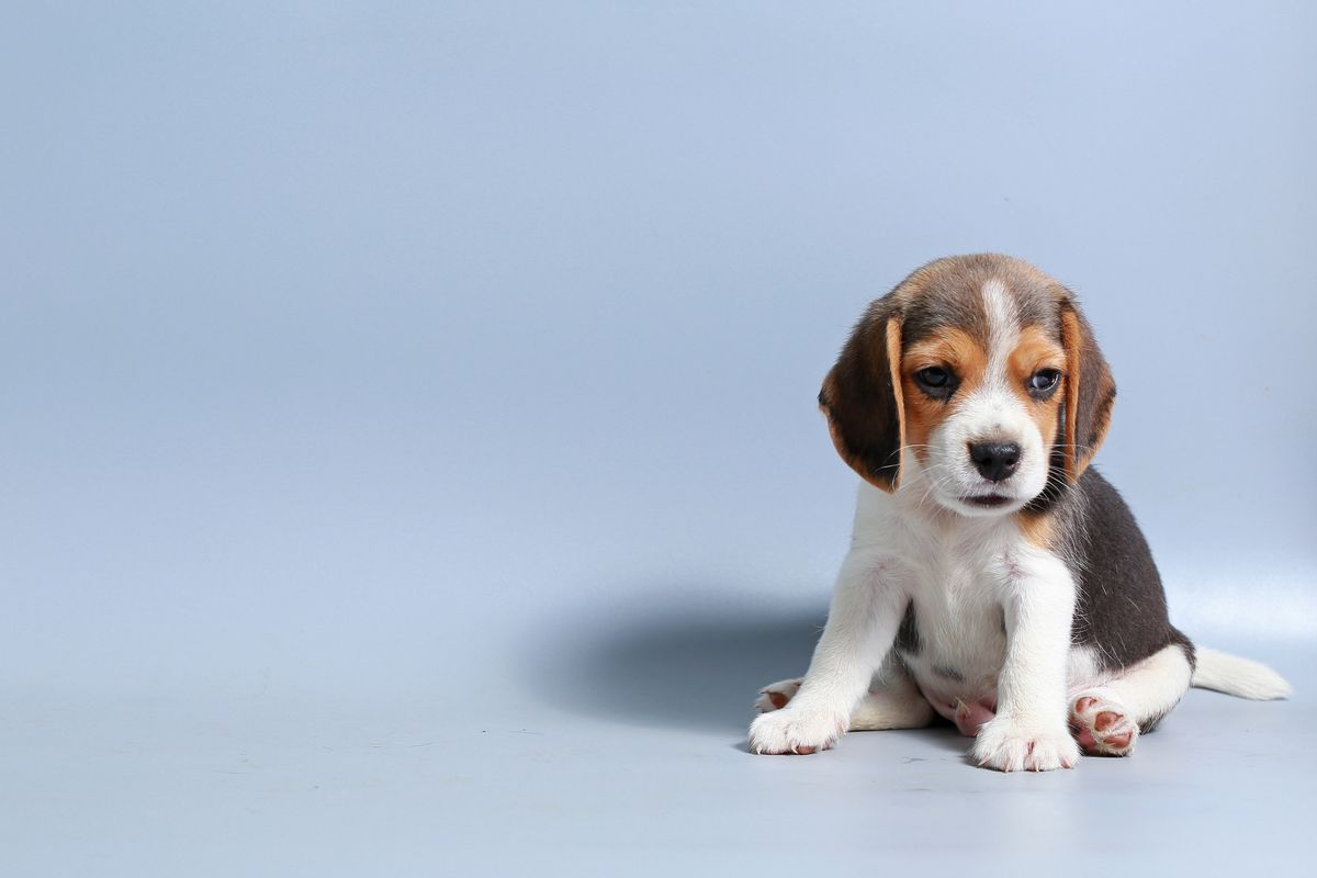 6 Questions You Should Always Ask When Buying A Puppy According To The Kennel Club