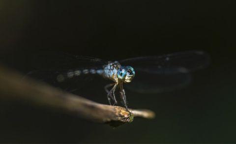 muggen, onderzoek, geprikt, muggenbeten