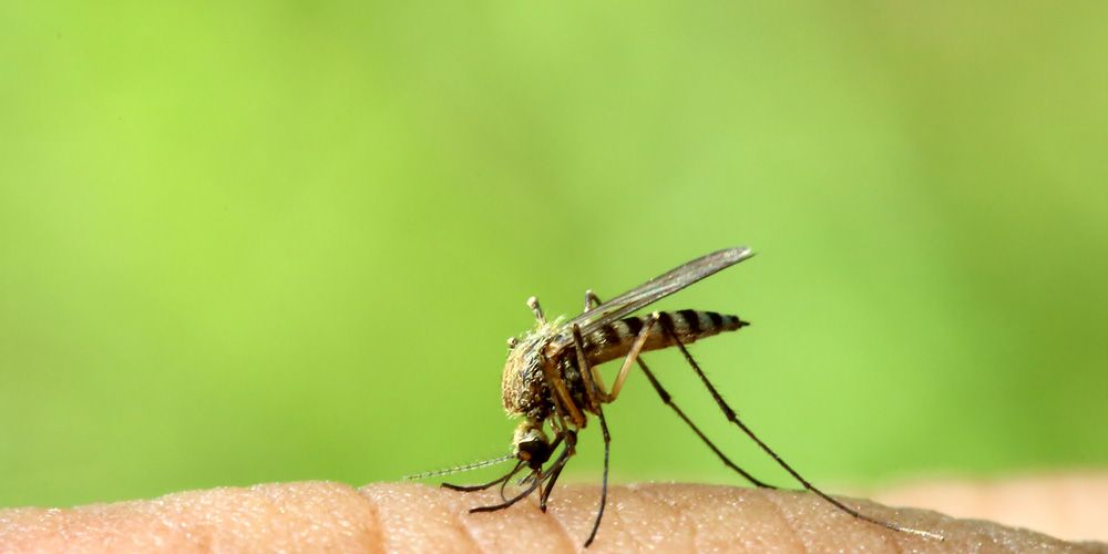 8 Ways to Get Rid of Mosquito Bites and Beat That Annoying Itch