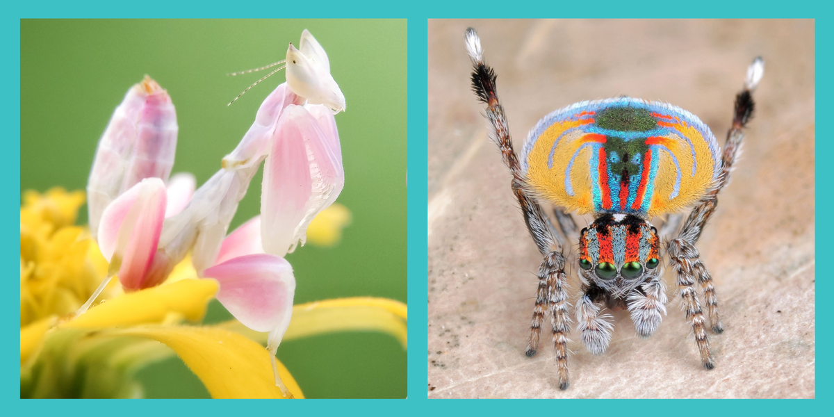 The 15 Most Beautiful Insects in the World