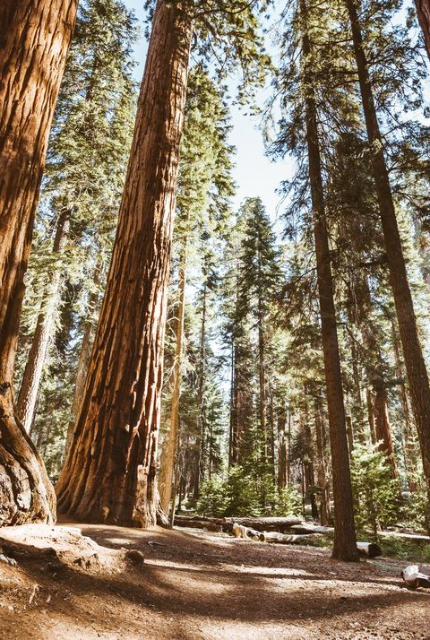 most beautiful places in the us sequoia national forest