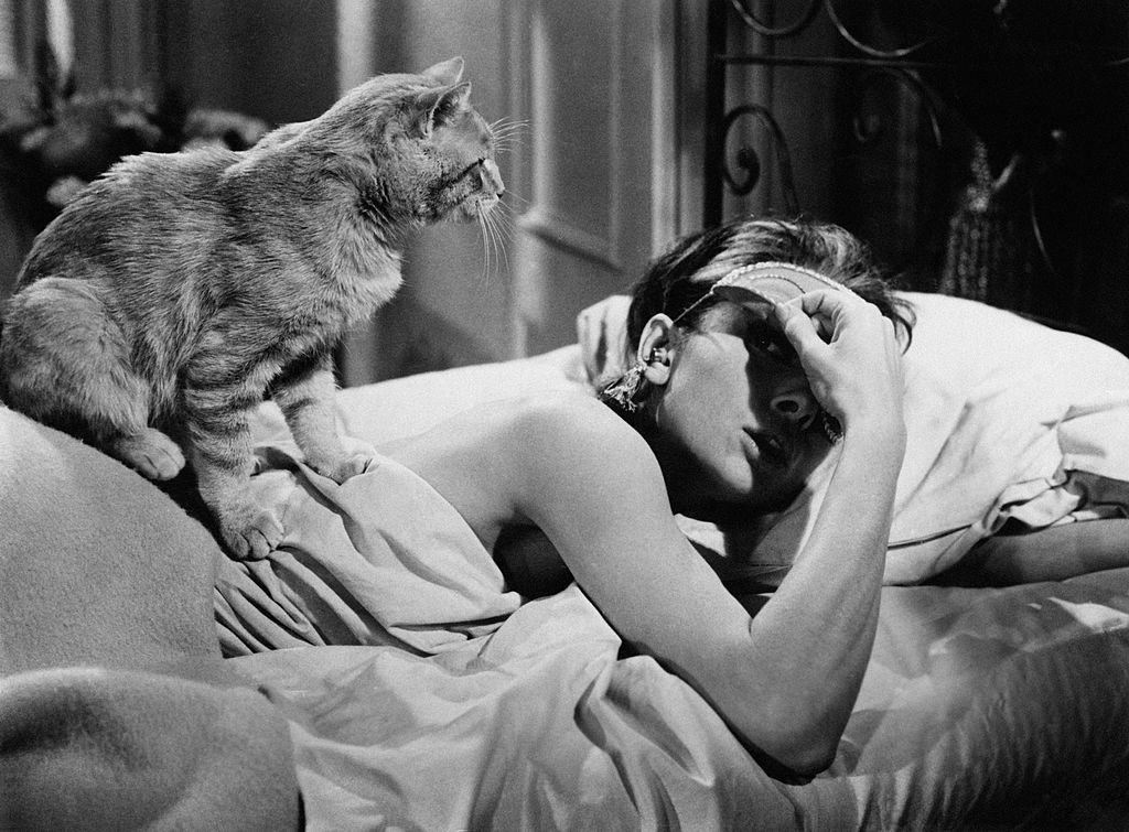 15 Famous Cats That You've Definitely Seen On Screen