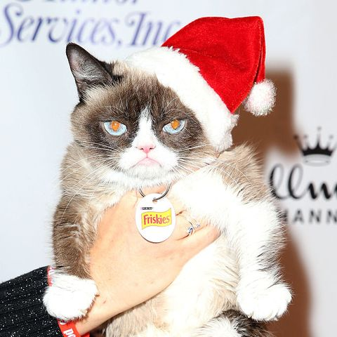 most-famous-cats-grumpy-cat
