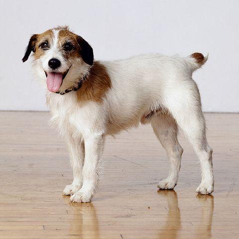most-popular-dog-eddie-frasier
