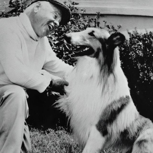 most-famous-dogs-Lassie