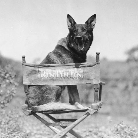 most-famous-dogs-RinTinTin