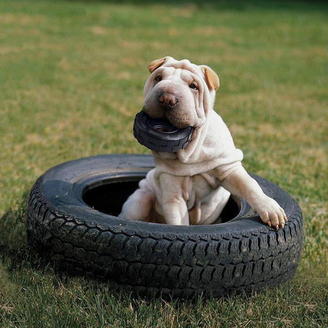 most indestructible dog toys -- kong tires