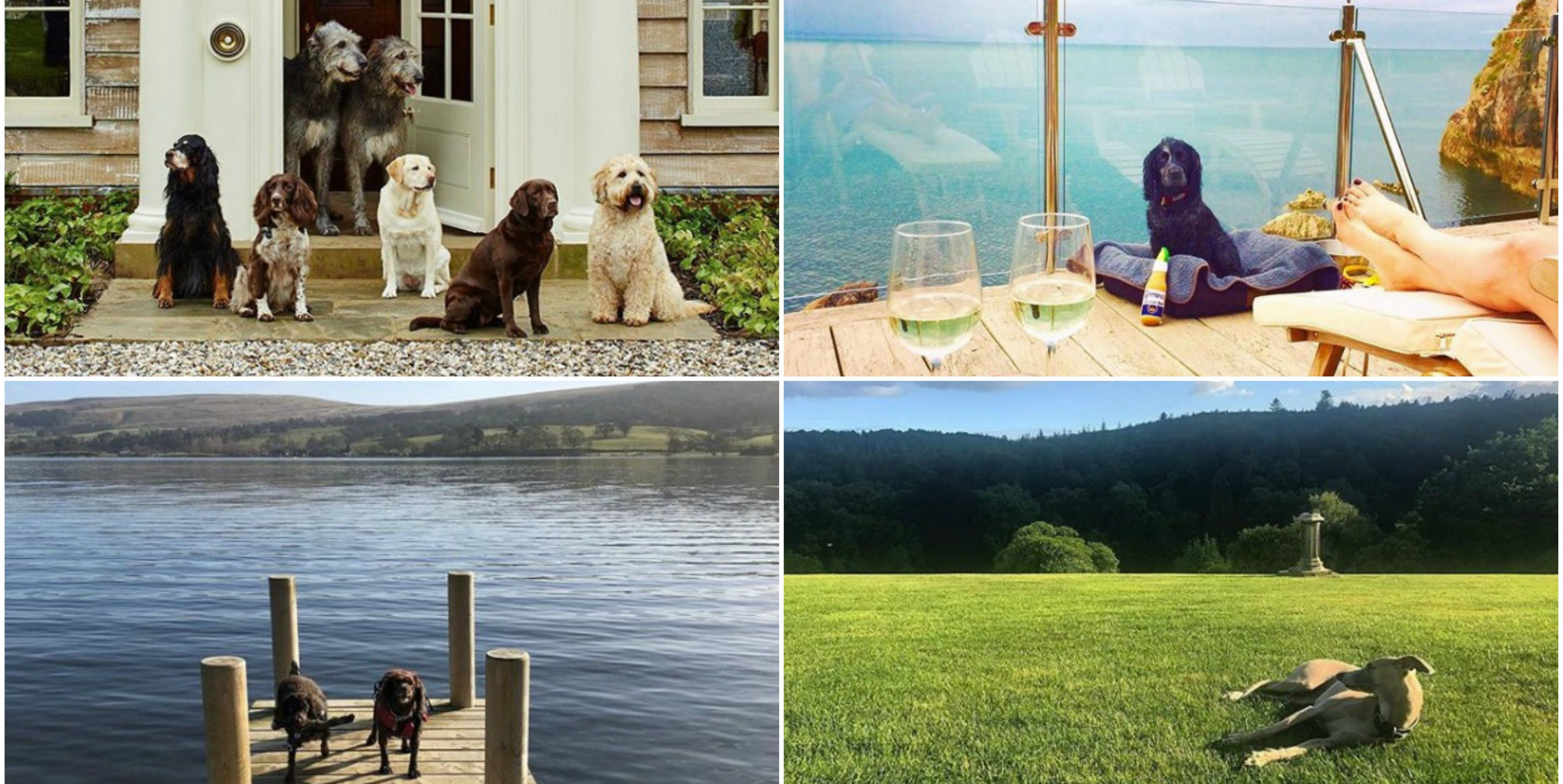 Most Instagrammable dog-friendly holiday stays - Instagram