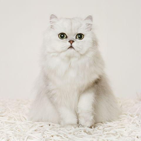 most-popular-cat-names-2019-luna