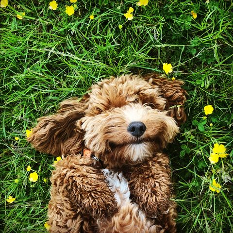 most-popular-dog-names-for-2019-charlie