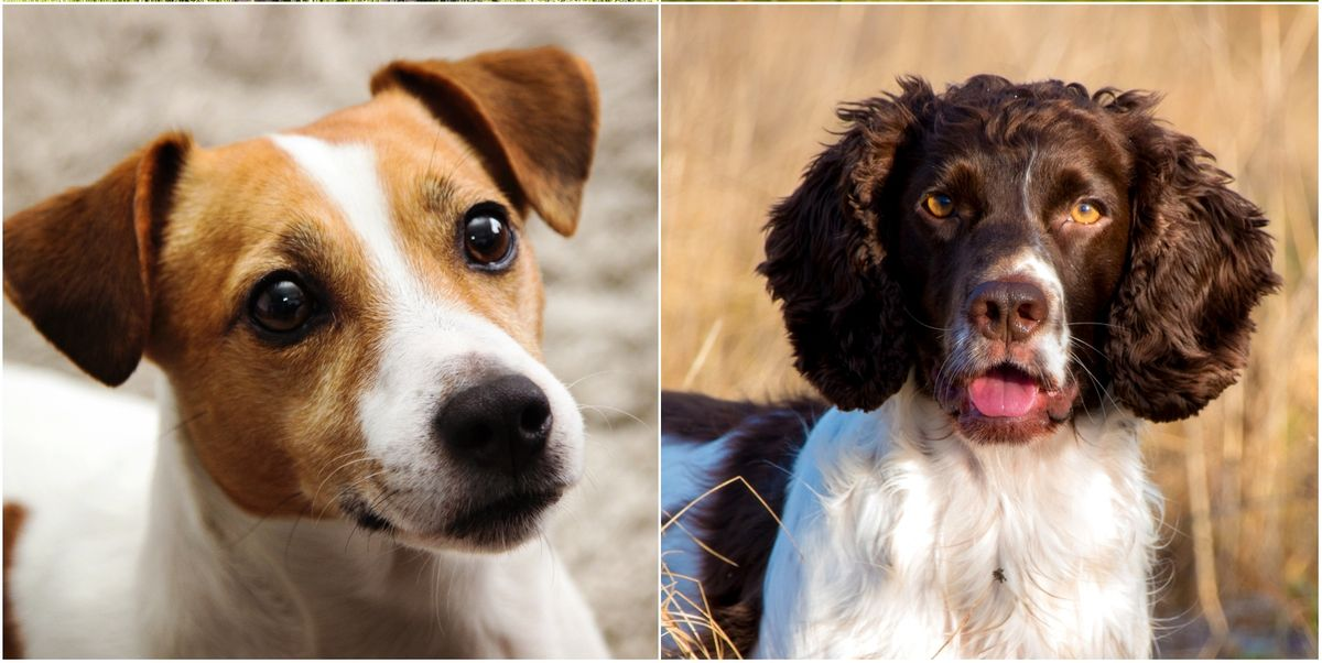 Revealed! 10 dog breeds most likely to be spoiled by their owners
