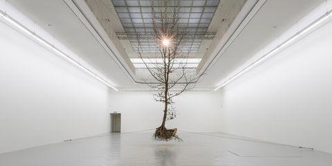 Ceiling, Floor, Tree, Branch, Line, Architecture, Interior design, Room, Flooring, Plant,