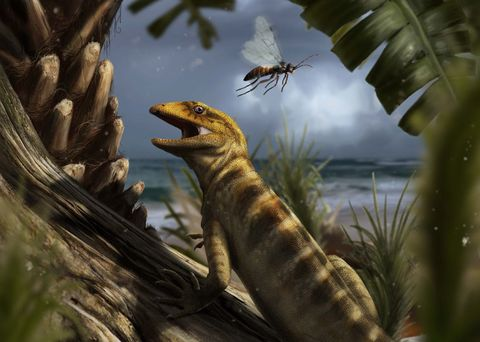 Reptile, Organism, Adaptation, Botany, Scaled reptile, Lizard, Wildlife, Amphibian, Plant, Tail,