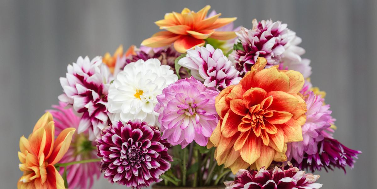 20 best mother 39 s day flower delivery services where to for Best mothers day flowers