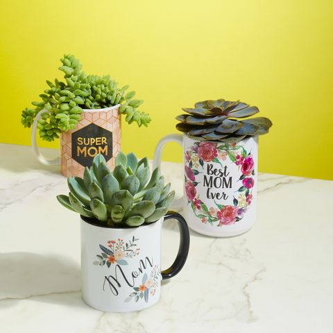 mother's day succulent mugs