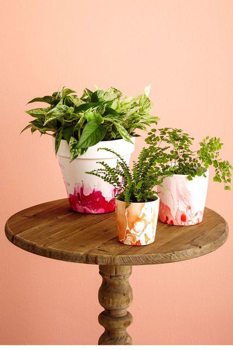 Flowerpot, Flower, Plant, Pink, Houseplant, Table, Cut flowers, Bouquet, Vase, Furniture,