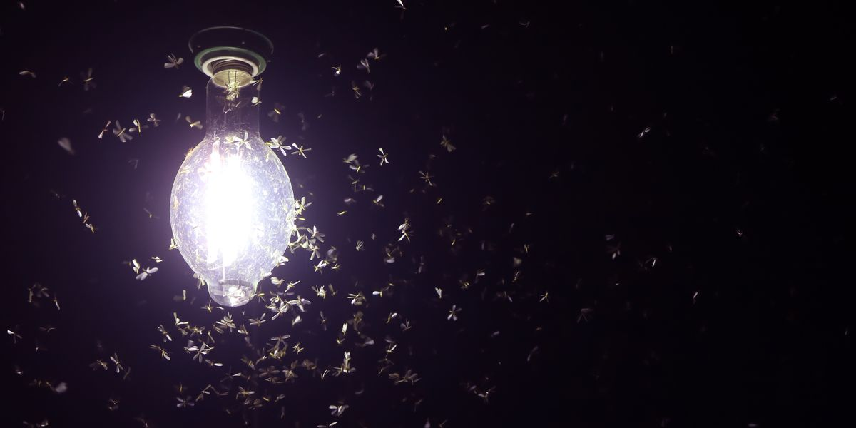 This LED Light Bulb Hack May Help Keep Bugs Away From Your Home