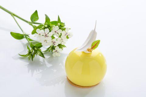 Yellow, Plant, Food, Flower, Still life, Still life photography,