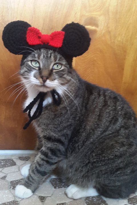 mouse cat halloween costume