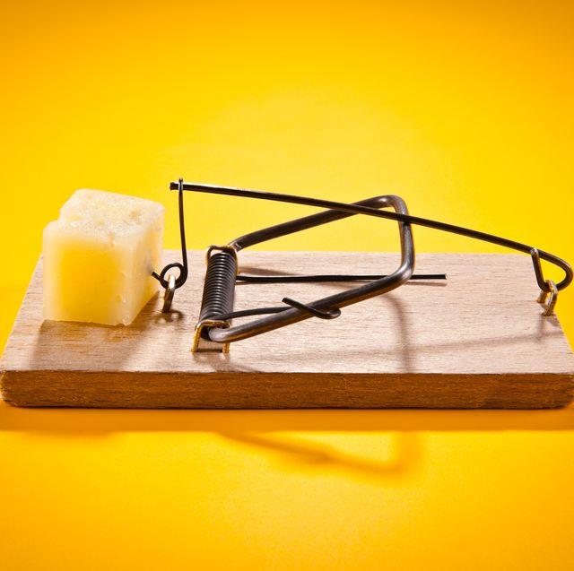 best mousetraps