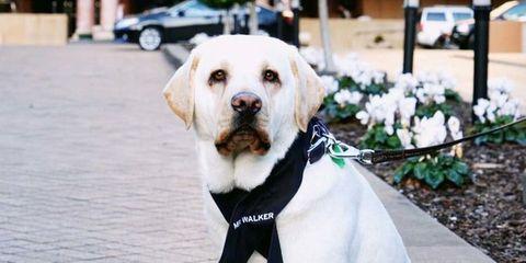 Mr. Walker dog concierge.