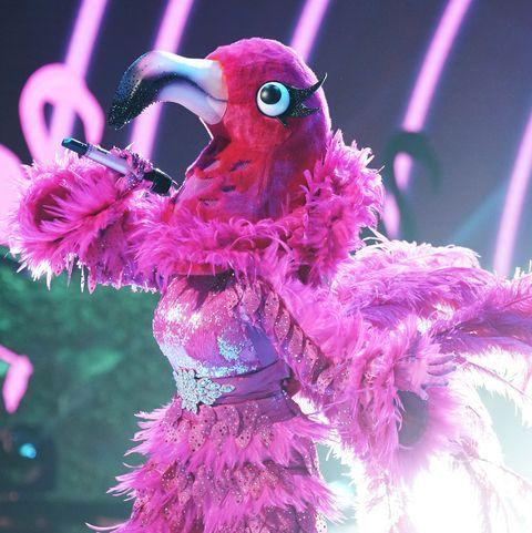 Pink, Purple, Bird, Magenta, Performance, Organism, Plant, Event, Neon, Performing arts,