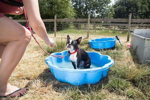 Mudchute Fun Dog Show, Isle of Dogs, London