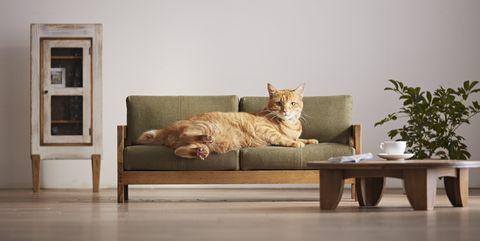 Muebles artesanales para gatos