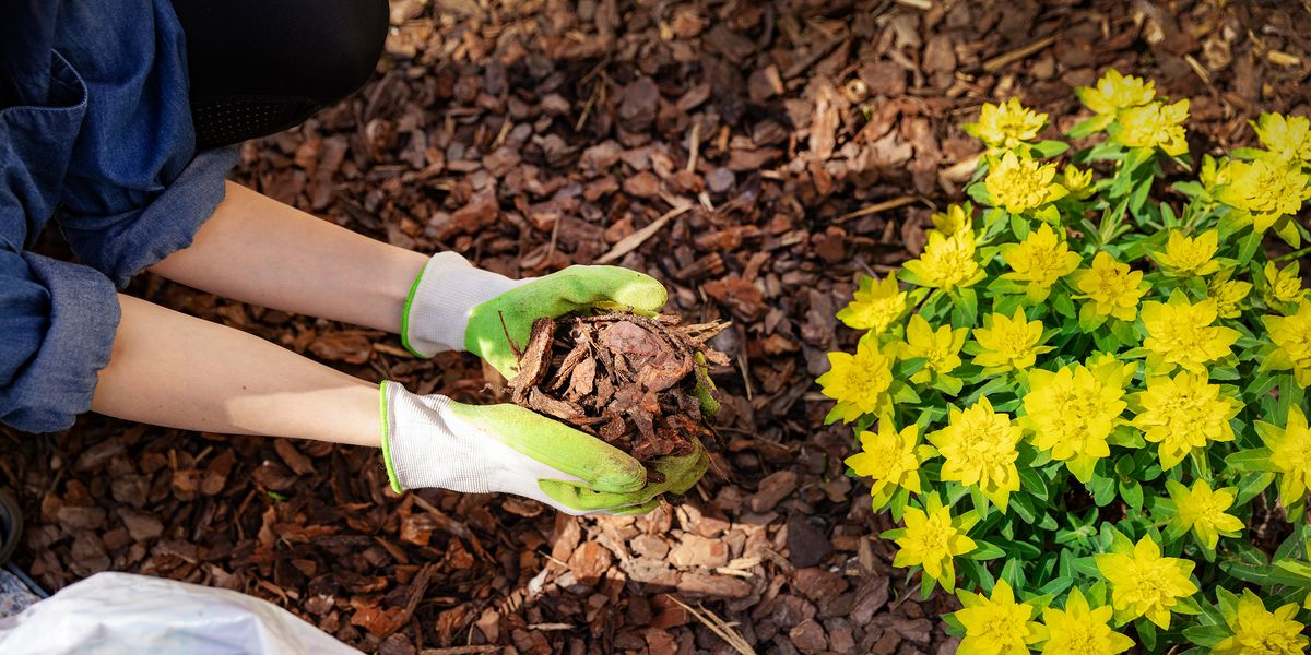 What is mulching and how do you do it?