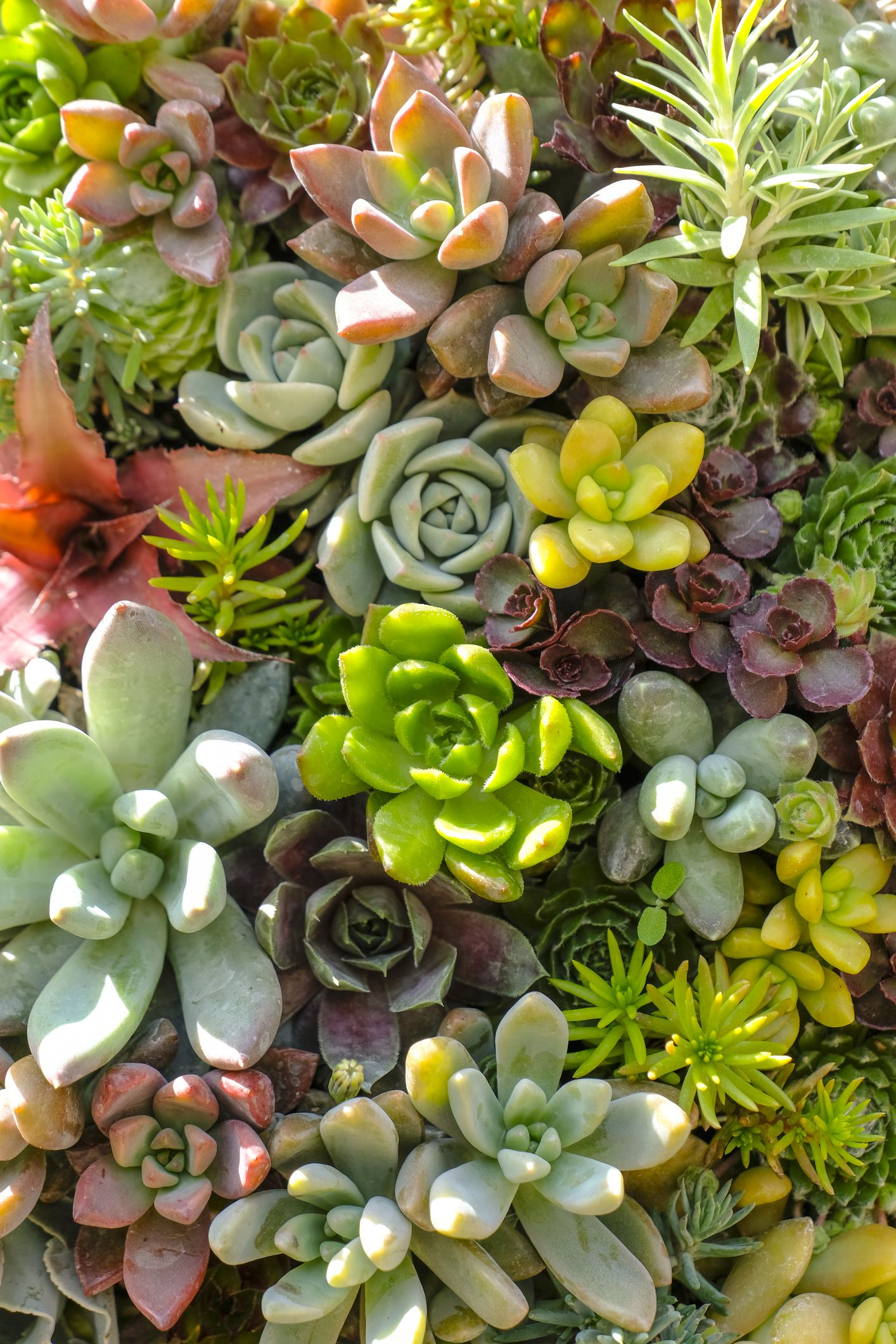 Costco Is Now Selling Succulent Gardens For An Extremely Low Price