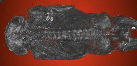 Fish, Fossil,