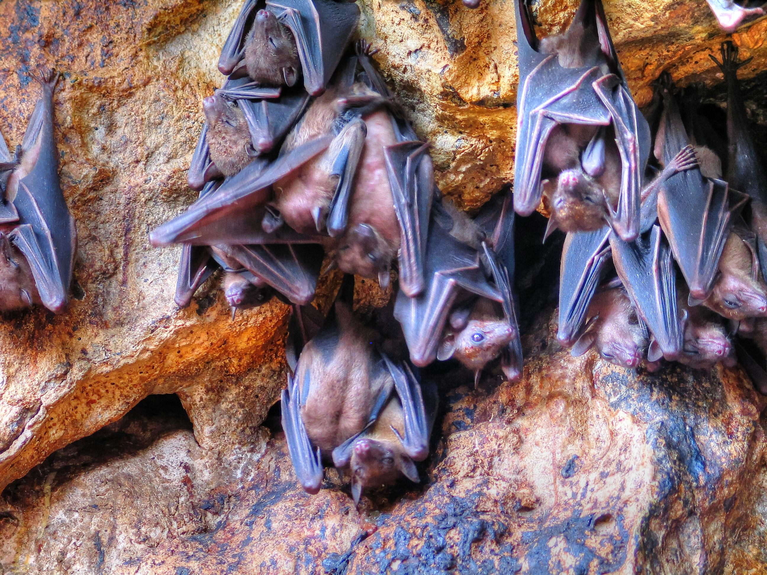 Bats stay warm by wrapping their wings around their bodies.