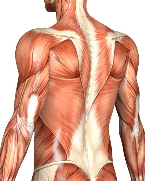 muscular back of a man