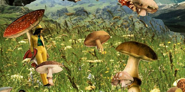 Why Some Women Are Treating Their Anxiety With Magic Mushrooms