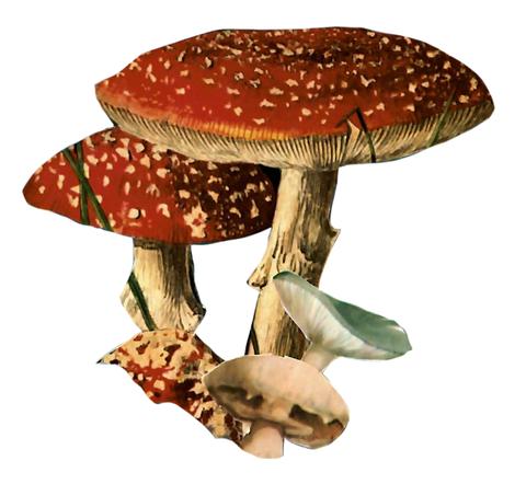 Magic Truffle Grow Kit Reddit