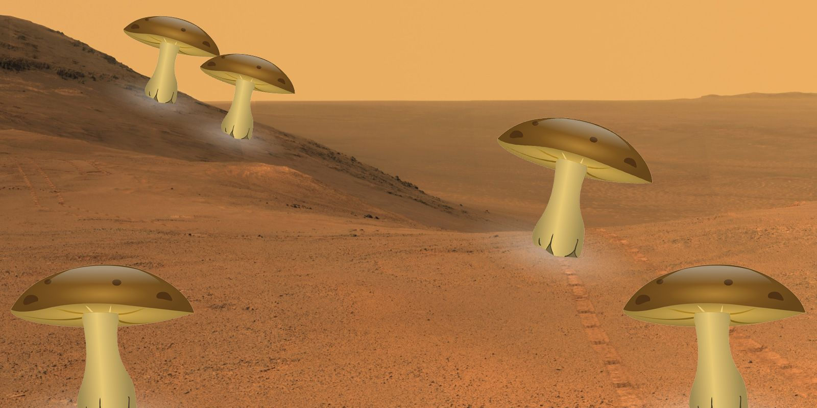 We're All Going to Live in Mushroom Houses on Mars