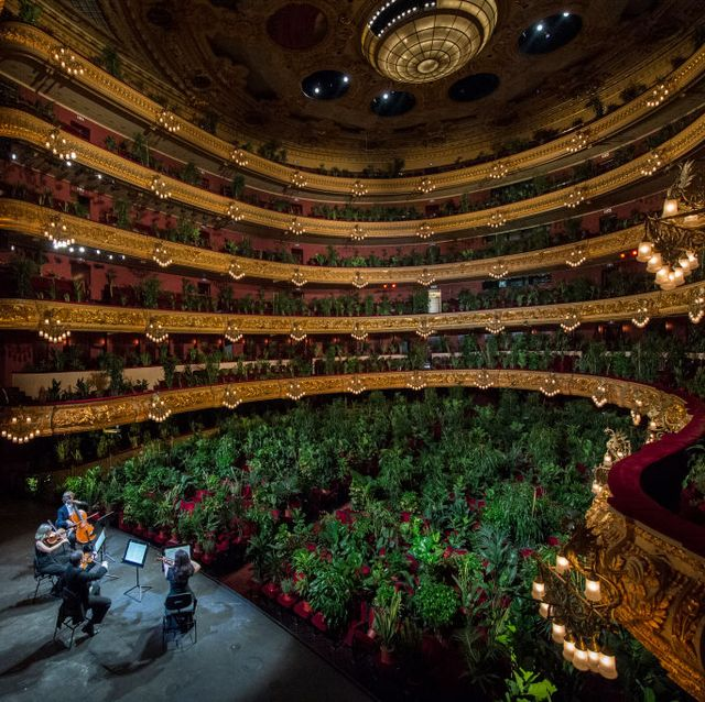liceu reopens with a streaming concert for two thousand plants