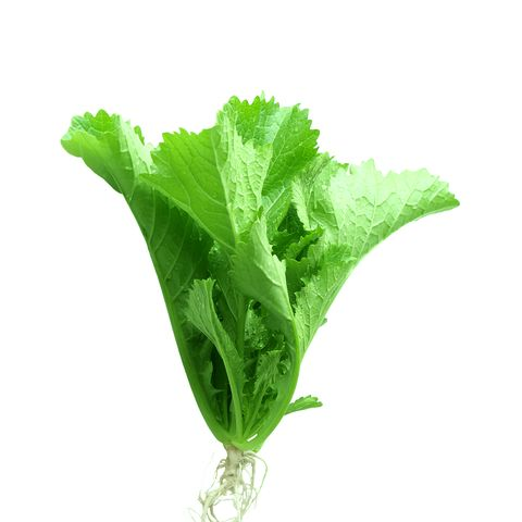 12 Most Nutritious Lettuces You Can Eat Greens And Lettuce Nutrition