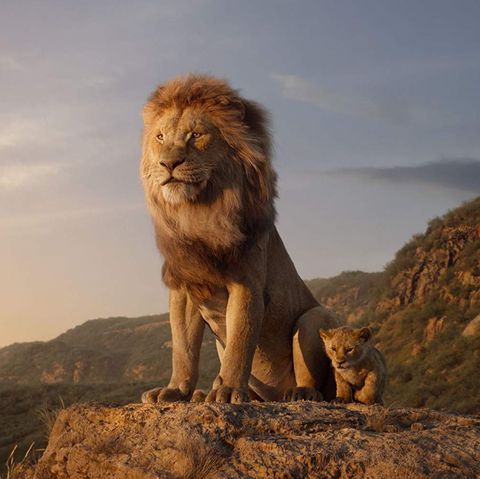 Lion King Remake Release Date Showtimes Beyoncé Song Trailer