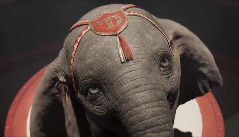 提姆波頓受訪時表示,《小飛象》之所以吸引他,就是因為故事簡單又動人,「小象呆寶象徵著一個無法融入社會,卻能把自己的缺陷轉變成優勢的人。電影擁有原著精神,卻同時能讓人感受恐懼、失望、快樂和幽默。」提姆波頓坦承,他從來不喜歡馬戲團圈養並訓練動物的行為,更不喜歡小丑及種種不怕死的特技,「但是馬戲團裡集合了許多不適應正常社會、甚至被視為異類的人,他們建立了屬於自己的家園,這也是一種浪漫,而我深深為此感到著迷。」
