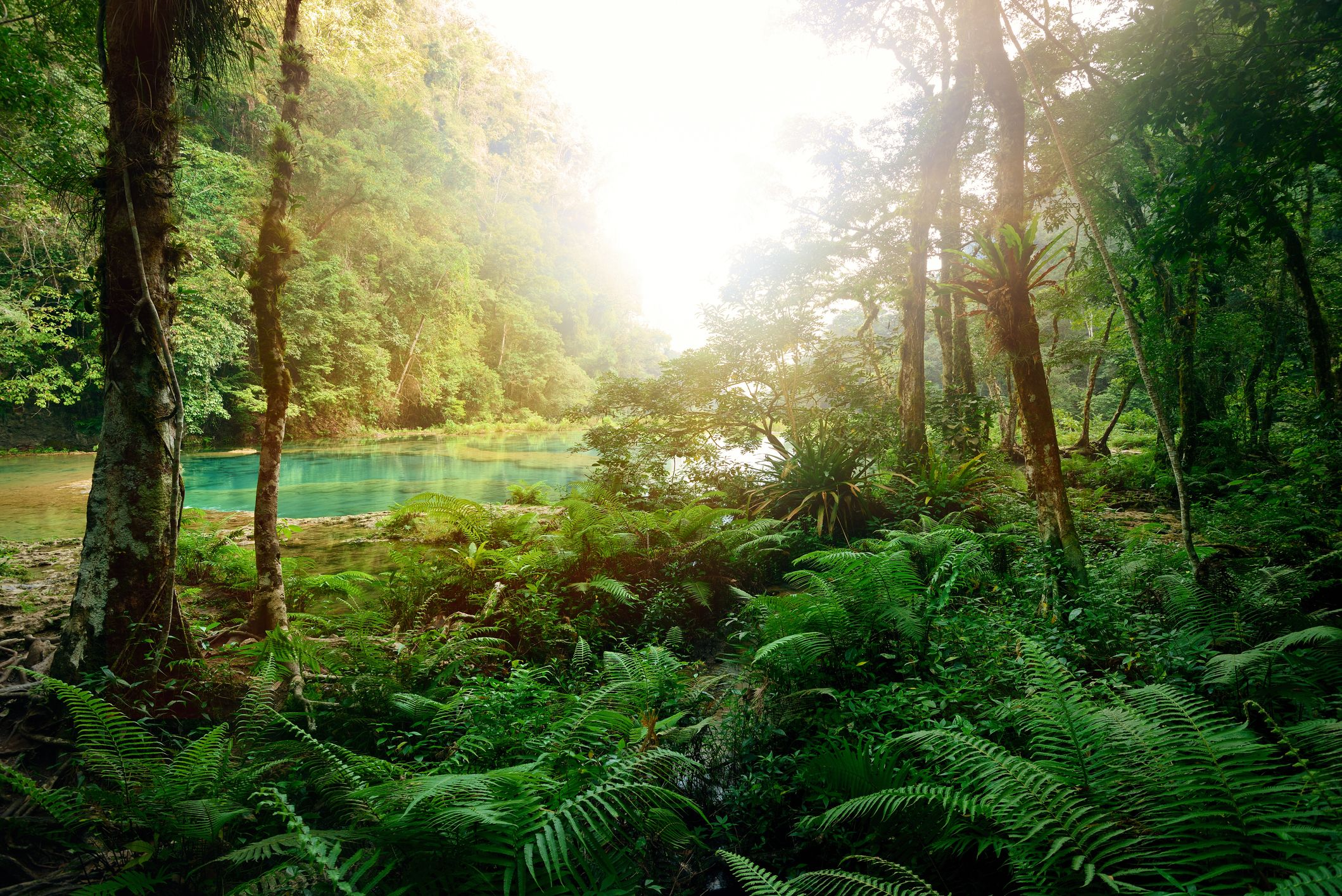 22 Little Things Anyone Can Do to Help Save the Rainforests