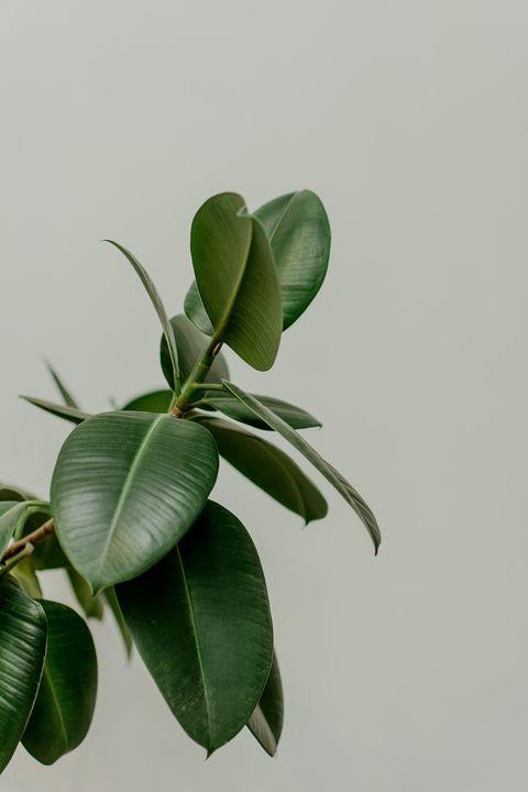 Leaf, Plant, Flower, Branch, Flowering plant, Tree, Houseplant, Plant stem, Twig,
