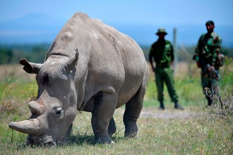 kenya conservation animal rhino