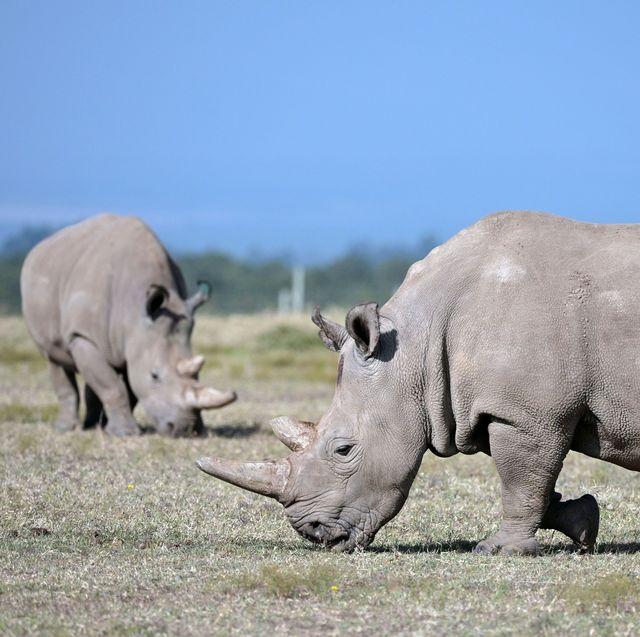 extinct animals, extinct animals we've lost