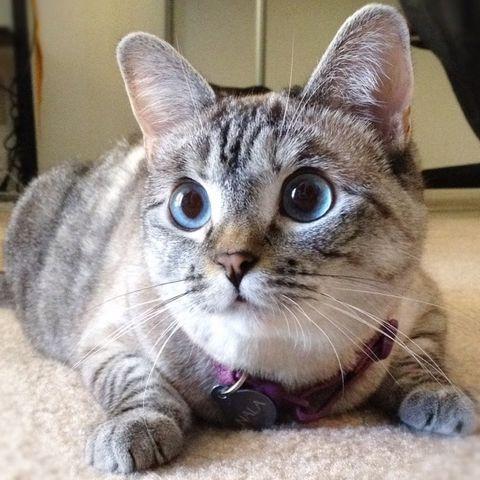 nala cat - animals to follow on instagram