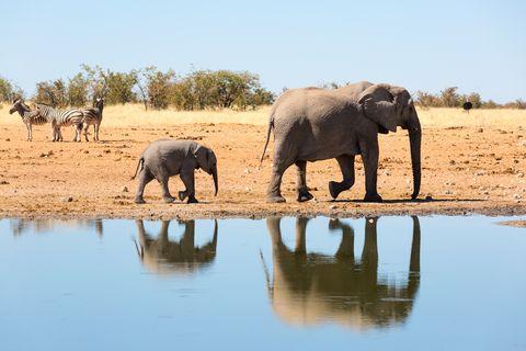 vakantie, juni, bestemmingen, zonvakantie, Namibië