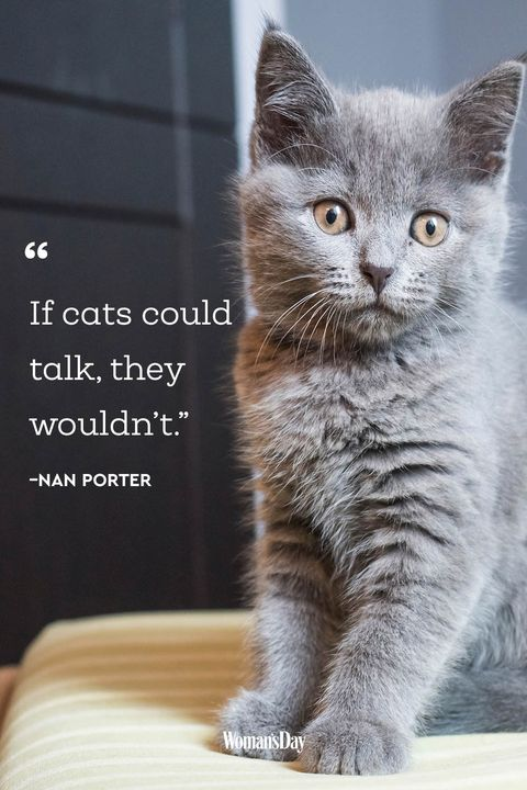 Best Cat Quotes - 20 Cute Cat Sayings That Describe Your Cat