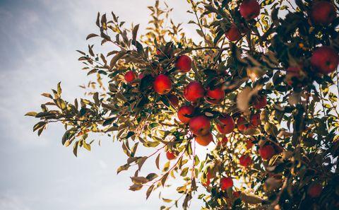 Tree, Plant, Flower, Branch, Fruit, Woody plant, Spring, Twig, Sorbus, Flowering plant,